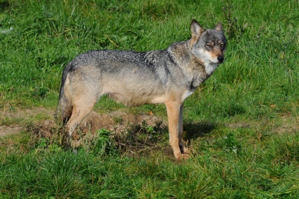 Standard ulv 64309