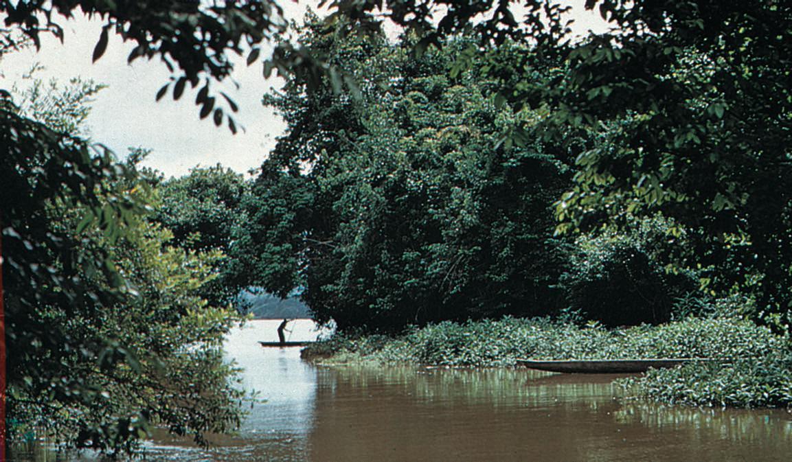 Standard afrika regnskog