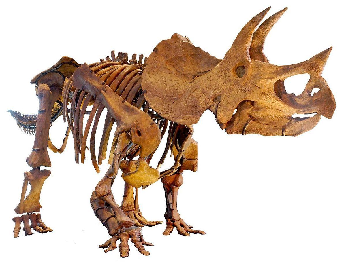Standard la triceratops mount 2