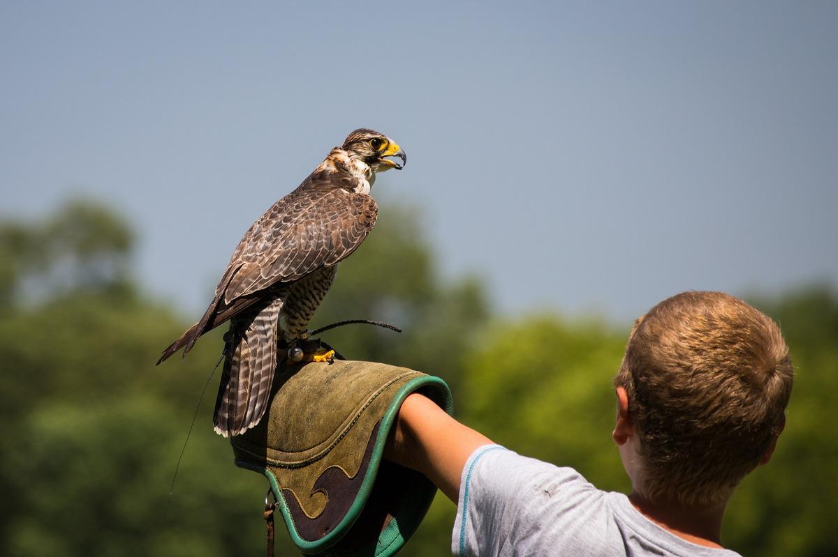 Standard falconry 4315392 1920