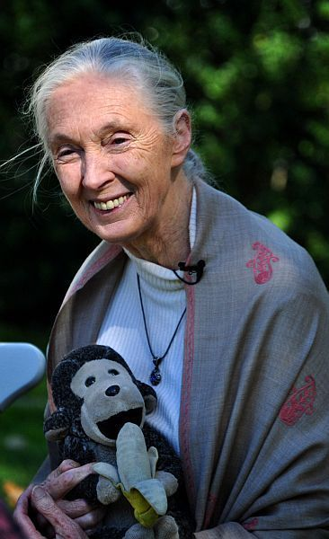 Standard jane goodall with toy
