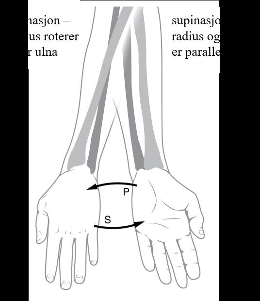 Standard supinasjon og pronasjon