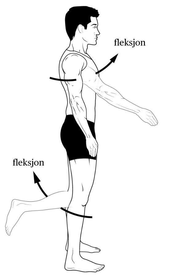 Standard fleksjon