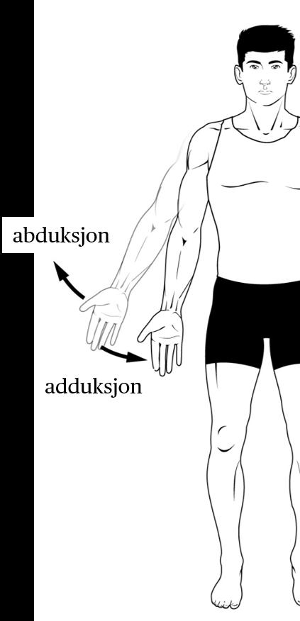 Standard adduksjon og abduksjon.jpg