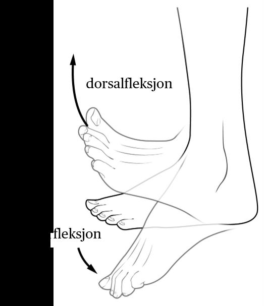 Standard dorsal  og plantarfleksjon
