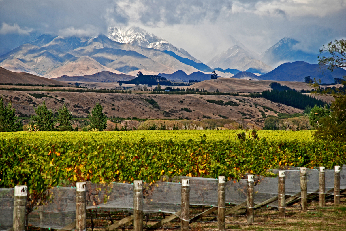 Standard awatere valley