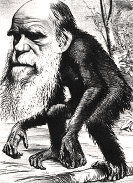 Standard darwin charles karikatur