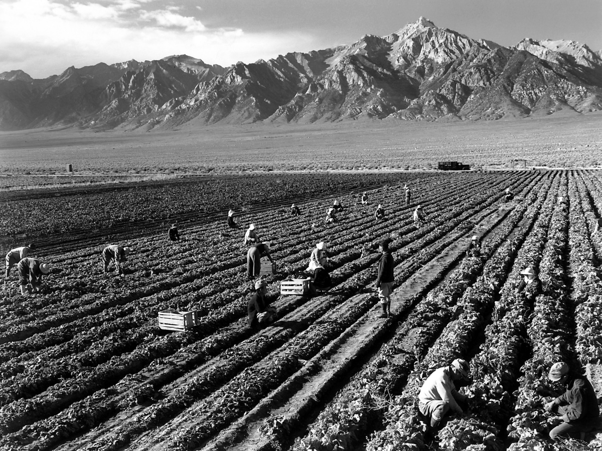 Standard ansel adams   farm workers and mt. williamson
