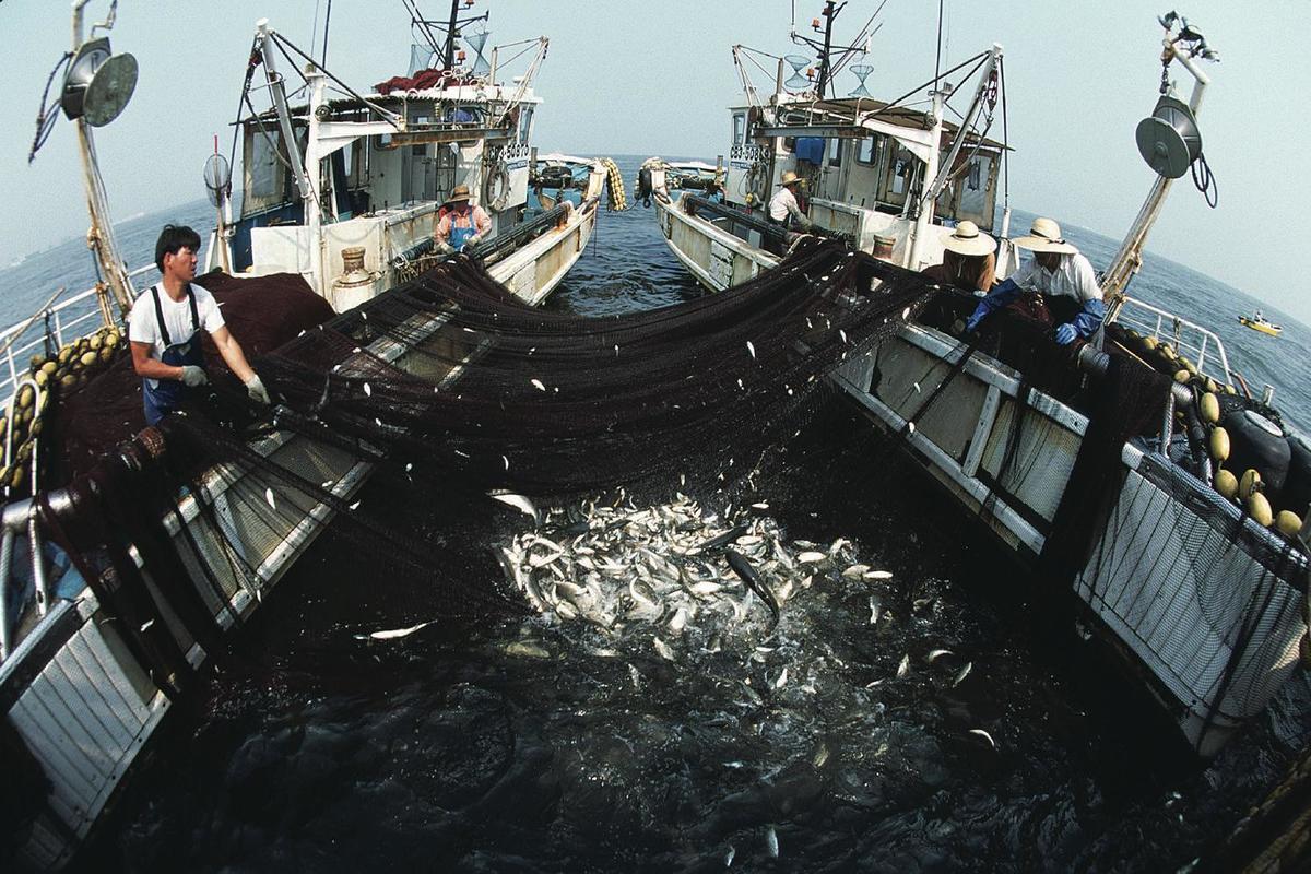 Standard japan fiskeri
