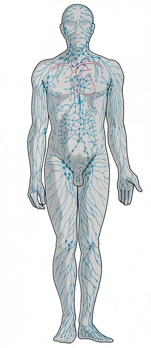 Standard lymfesystemet