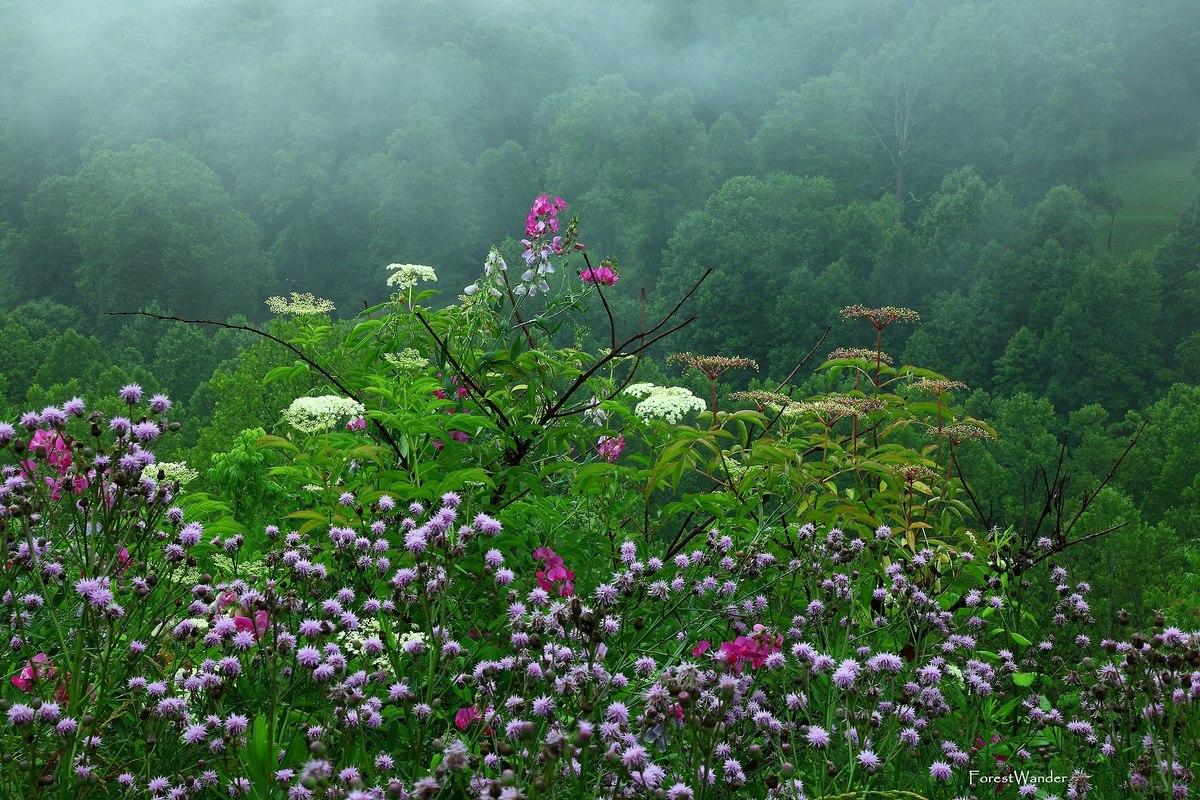 Standard beautiful late spring rain wildflowers   west virginia   forestwander  1