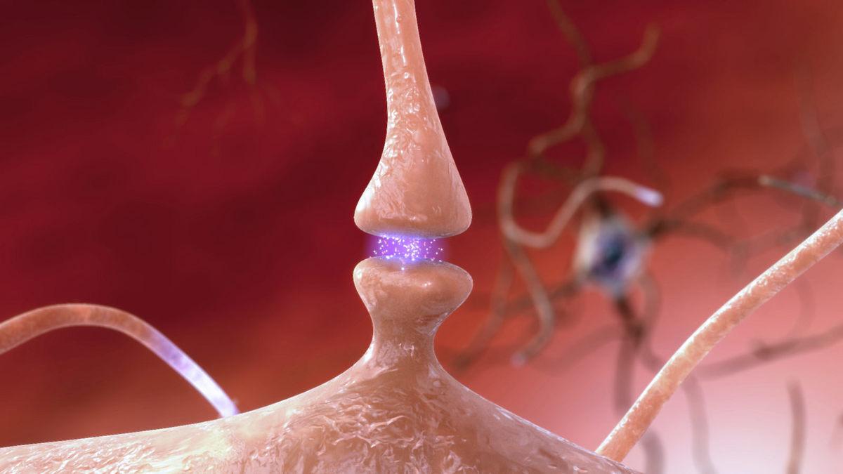 Standard synapse