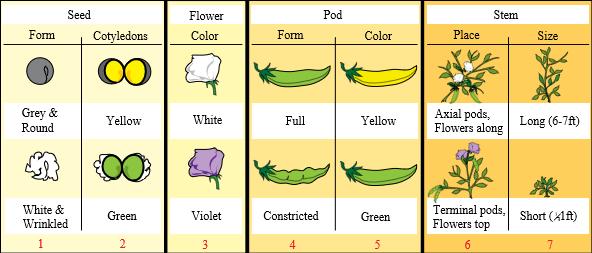 Standard mendel seven characters